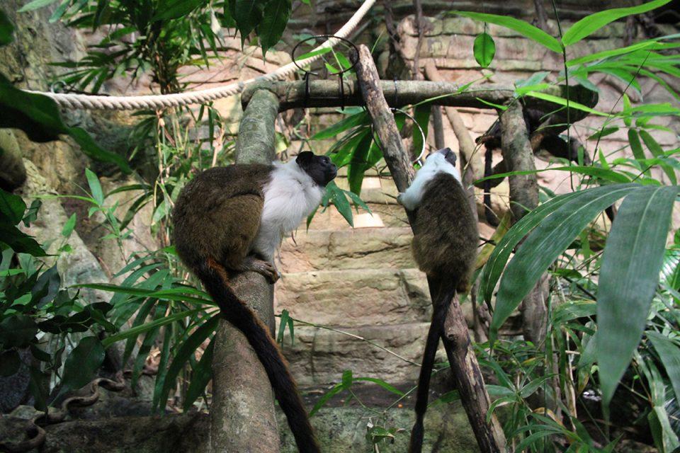 Foto av två apor i en djungelmijlö